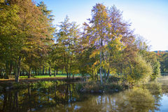 Осень и природа Стоковое Изображение