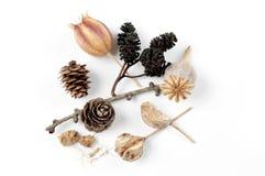 осень кладет различные валы в коробку семени заводов Стоковая Фотография