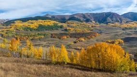 Осень Колорадо Стоковые Фотографии RF