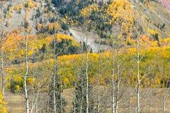 Осень Колорадо Стоковая Фотография RF