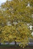 осень красит вал Стоковое фото RF