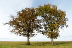 осень красит вал Стоковая Фотография