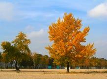 осень красит золотистыми Стоковая Фотография RF