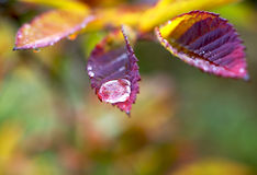осень красит ненастной Стоковые Фото