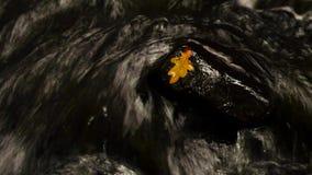 осень красит поток Сухие лист дуба кладут на влажный камень базальта Листья камня и осени сток-видео