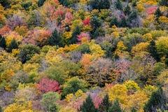 Осень красит предпосылку Стоковое Фото