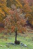 осень красит пущу стоковые фотографии rf