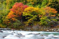 осень красит реку oirase стоковое фото rf