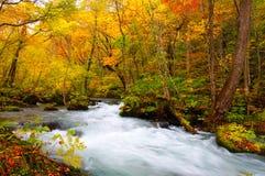 осень красит реку oirase стоковое изображение