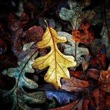 Осень красит собрание Стоковое Фото