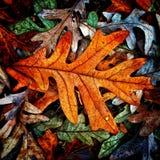 Осень красит собрание Стоковое Изображение