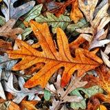 Осень красит собрание Стоковое фото RF