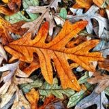 Осень красит собрание Стоковая Фотография