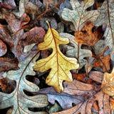 Осень красит собрание стоковые фотографии rf