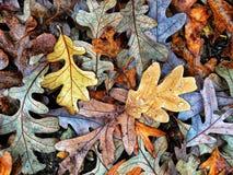 Осень красит собрание стоковая фотография rf