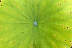 осень красит текстуру картины листьев безшовную Стоковые Фото