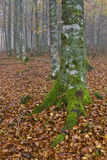 осень красит туманнейшим стоковое изображение