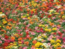осень красит цветки стоковые изображения