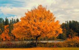 Осень красит штат Вашингтона стоковое фото rf