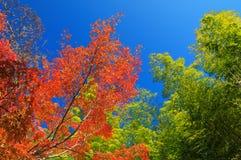 осень красит японию Стоковые Изображения RF