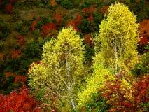 осень красит яркий Стоковые Изображения