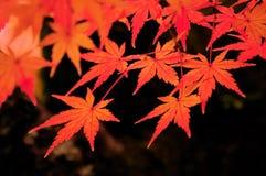 осень красит kyoto Стоковое Изображение