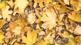 Осень, красочные листья лежа на том основании в парке осени стоковые изображения rf