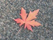Осень кленового листа Стоковые Фото