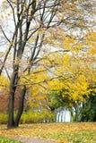 Осень, ландшафт падения Апельсин, красочная листва Парк Стоковое Фото