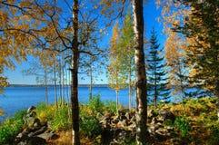 Осень, ландшафт падения Деревья с красочными листьями в лесе Стоковые Фотографии RF