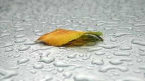 осень лежит лист Стоковое Изображение RF