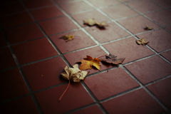 осень листает листья Стоковое Изображение RF