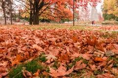 Осень листает на том основании Стоковая Фотография