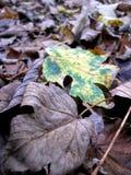 Осень Листья Стоковые Фотографии RF
