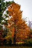 осень Минесота стоковое изображение rf
