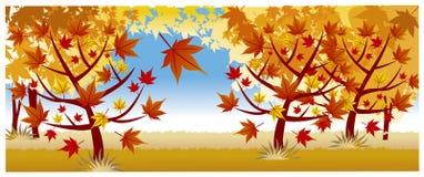 осень много валов клена Стоковая Фотография