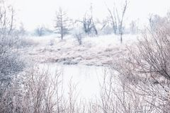 Осень морозного утра последняя на реке Кусты и заводы предусматриванные с белым заморозком Стоковые Изображения