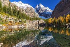 Осень национального парка Yoho красит ландшафт лиственниц Стоковые Изображения RF