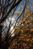 Осень на Волга стоковое фото