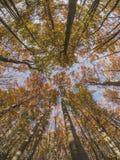 Осень на горе стоковое фото