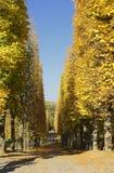 Осень на задворк и саде Предпосылка природы с красочными деревьями на солнечном дне стоковые фотографии rf
