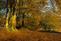 Осень на общем Woodbury, Девоне Стоковые Фото