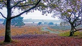 Осень на общем Woodbury, Девоне Стоковое фото RF