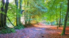 Осень на общем Woodbury, Девоне Стоковые Фотографии RF