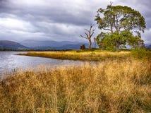 Осень на озере Bassenthwaite Стоковая Фотография RF