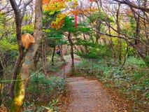 Осень на острове Jeju стоковое фото rf