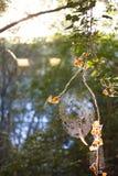 Осень на пути Стоковые Фотографии RF