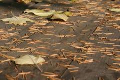 Осень на таблице Стоковые Фото