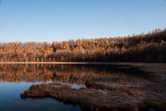 Осень на Arshan, Китае Стоковые Фото