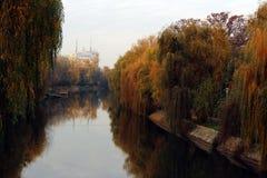 Осень на Bega стоковое фото rf